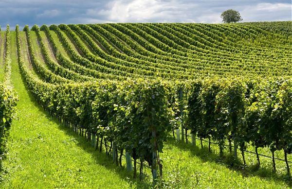 Gli italiani e l'agricoltura, cresce l'attenzione per la qualità